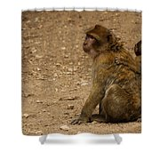 Macaque Monkeys Shower Curtain