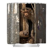 Macaque Peeking Out Shower Curtain