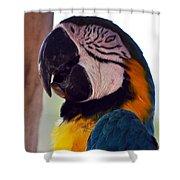 Macaw Head Study Shower Curtain