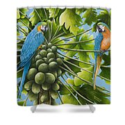 Macaw Parrots In Papaya Tree Shower Curtain