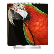 Macaw Profile Shower Curtain by John Telfer
