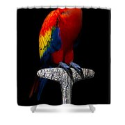 Macaw... Shower Curtain