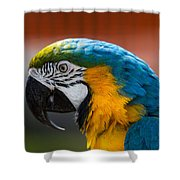 Macaw Tropical Bird Shower Curtain