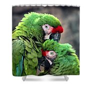 Macaws In Love Shower Curtain