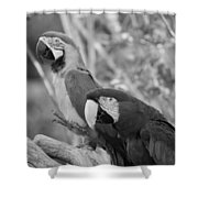 Macaws Of Color B W 14 Shower Curtain