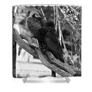 Macaws Of Color B W 15 Shower Curtain