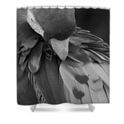 Macaws Of Color B W 16 Shower Curtain