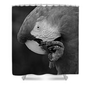 Macaws Of Color B W 18 Shower Curtain