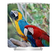 Macaws Of Color23 Shower Curtain