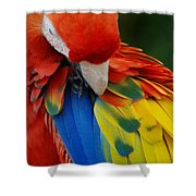 Macaws Of Color25 Shower Curtain