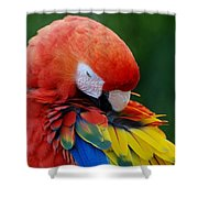 Macaws Of Color26 Shower Curtain