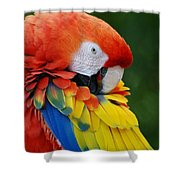 Macaws Of Color28 Shower Curtain
