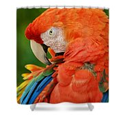 Macaws Of Color29 Shower Curtain
