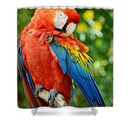 Macaws Of Color31 Shower Curtain