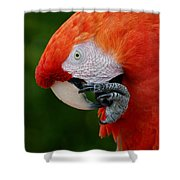 Macaws Of Color32 Shower Curtain