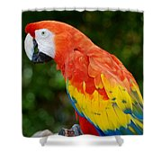 Macaws Of Color33 Shower Curtain