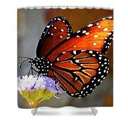Macro Butterfly Shower Curtain