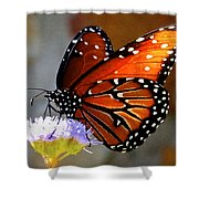 Macro Butterfly Shower Curtain