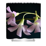 Macro Clover Shower Curtain