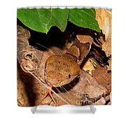 Macro Copperhead Shower Curtain