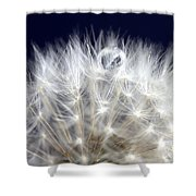 Macro Dandelion Shower Curtain