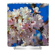 Macro Dc Cherry Blooms Shower Curtain