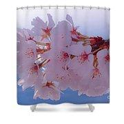 Macro Dc Cherry Blossoms Shower Curtain