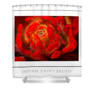 Indian Paintbrush Poster Shower Curtain