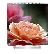 Macro Orange And Pink Floribunda Rose Shower Curtain