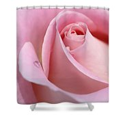 Macro Pink Rose Flower Raindrop Shower Curtain
