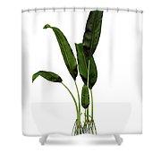 Macrotaeniopteris Prehistoric Plant Shower Curtain