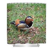 Madarin Duck Shower Curtain