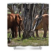 Made In The Shade Shower Curtain