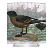 Madeira Petrel Shower Curtain