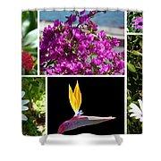 Madeiran Flower Collage Shower Curtain