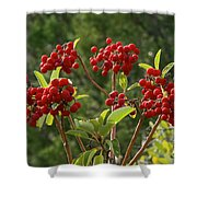 Madrone Berries Shower Curtain