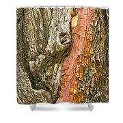 Madrone Tree Bark Shower Curtain
