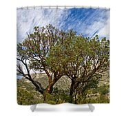 Madrone Trees Shower Curtain