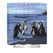 Magellanic Penguin Trio On Beach Shower Curtain