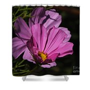 Magenta Cosmos 2 Shower Curtain