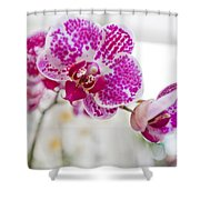 Magenta Ears Orchid Shower Curtain