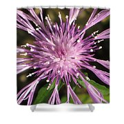 Magenta Fireworks Shower Curtain