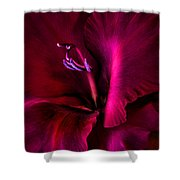 Magenta Gladiola Flower Shower Curtain