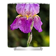 Magenta Iris Crop Shower Curtain