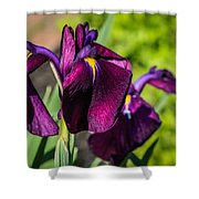 Magenta Iris Shower Curtain