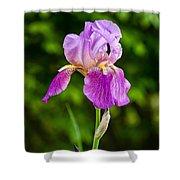 Magenta Iris Profile Shower Curtain