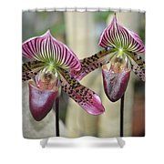 Magenta  Lady Slippers Shower Curtain