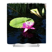 Magenta Lily Monet Shower Curtain