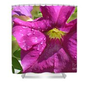 Magenta Majesty Shower Curtain