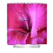 Magenta Splendor Gladiola Flower Shower Curtain by Jennie Marie Schell